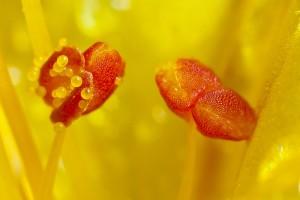 一朵花儿的内心世界 肖怡华摄